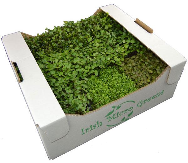 Irish Micro Greens Mixed Box
