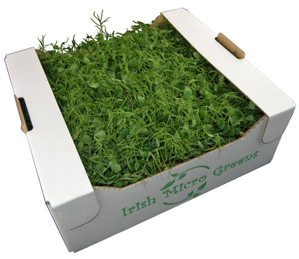 Irish Micro Greens Pea Shoots